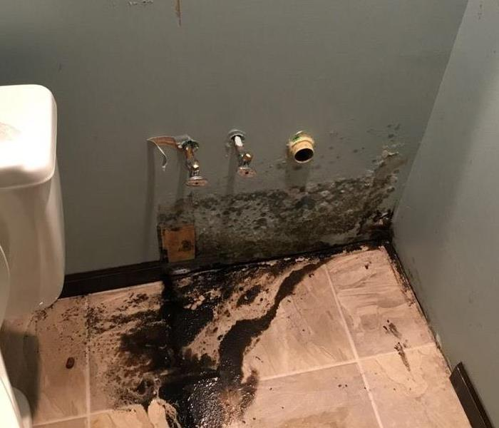 Mold Damage in your Home?