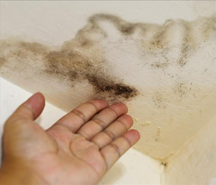Why SERVPRO What Do Professionals Do to Stop Mold Growth?