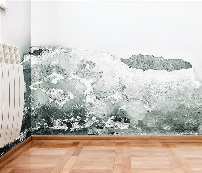 A wall in a room with mold on the walls.